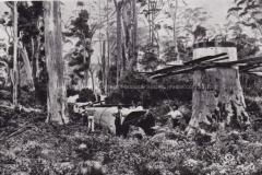 'The Fallen Giant'
