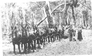 Logging whim on the north bank of the Margaret River, 1905/6.