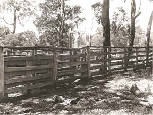 Post and rail stockyards, 1921. Wallcliffe Estate