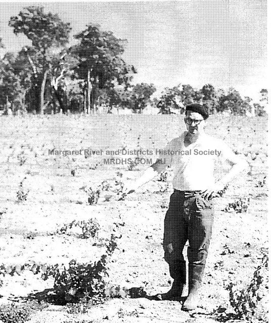 Dr Tom Cullity with early Vasse Felix vines, 1960s